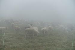 Nebel während dem ganzen Aufstieg