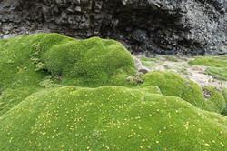 Grüne Polster
