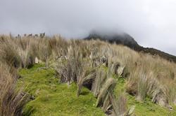 Spannende Vegetation in den Anden
