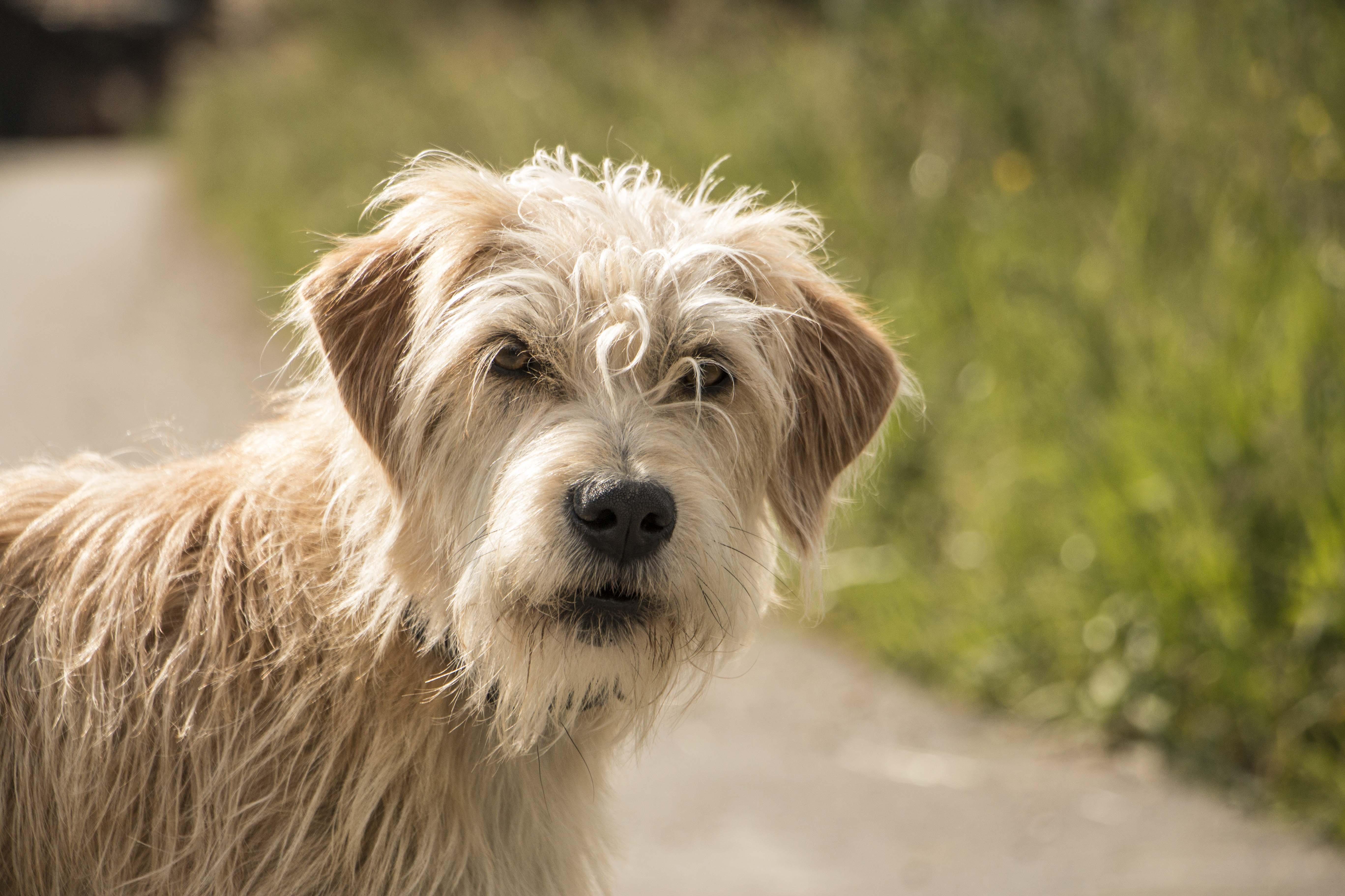 Hofhund in Bättwil