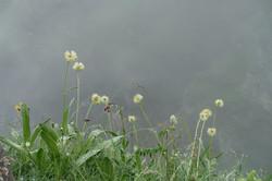 Auch Nebel hat seinen Reiz