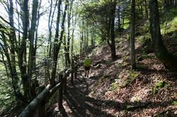 Unendliche Tessinerwälder