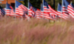 American flags in a field
