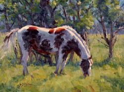 Backlit Pony
