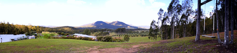 Lonely Goat Olives - Panorama - Hunter Valley Accomodation, Wedding Venue, Olive Trees for sale