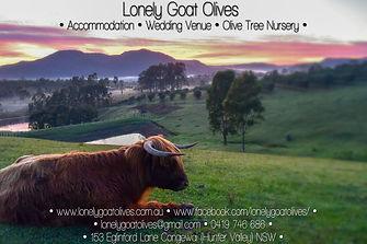 Lonely Goat Olives - Cottage Accommdation, Wedding Venue, Olive Trees For Sale, Hunter Valley