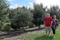 Lonely Goat Olives