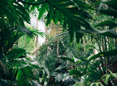 Ostern im Dschungel
