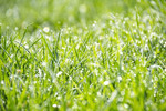 image of grass.jpg