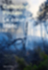 Couv Le coeur blanc (2).jpg