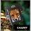 Thumbnail: Fox Wallet