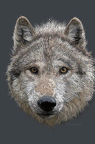 Wolf Stare Postcard - 3D Lenticular