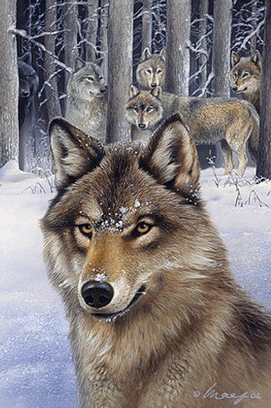 Wolf Pack Postcard - 3D Lenticular