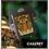 Thumbnail: Tiger Wallet
