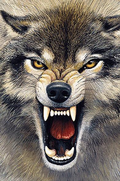 Wolf Postcard - 3D Lenticular