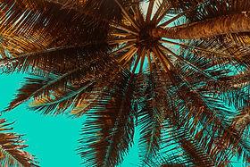 trees-3619180.jpg
