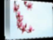 Minimal-Magnolia_art.png