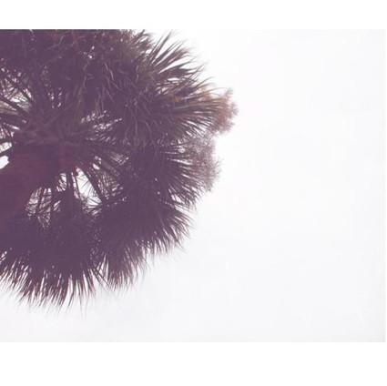minimal palm