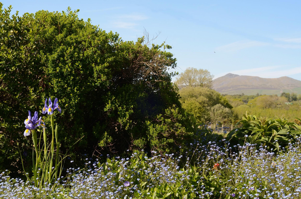 The_Longhouse_Garden_2.jpg
