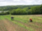 Tamar Valley growers