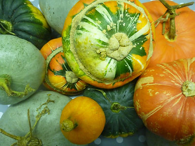 Green and orange autumnal squashes and gourds.