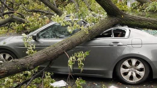 Кто когда должен платить владельцам за раздавленные упавшими деревьями автомобили