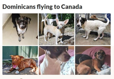 Dominicans Flying to Canada Fundraiser
