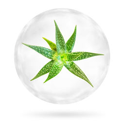 Aloe Vera in the bubble isolated on whit