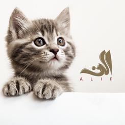 Alif UK