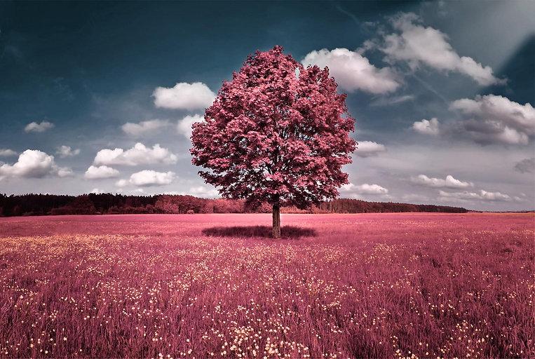 Web Baum.jpg
