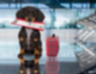 hond-mee-in-het-vliegtuig-woefwelkom.jpg