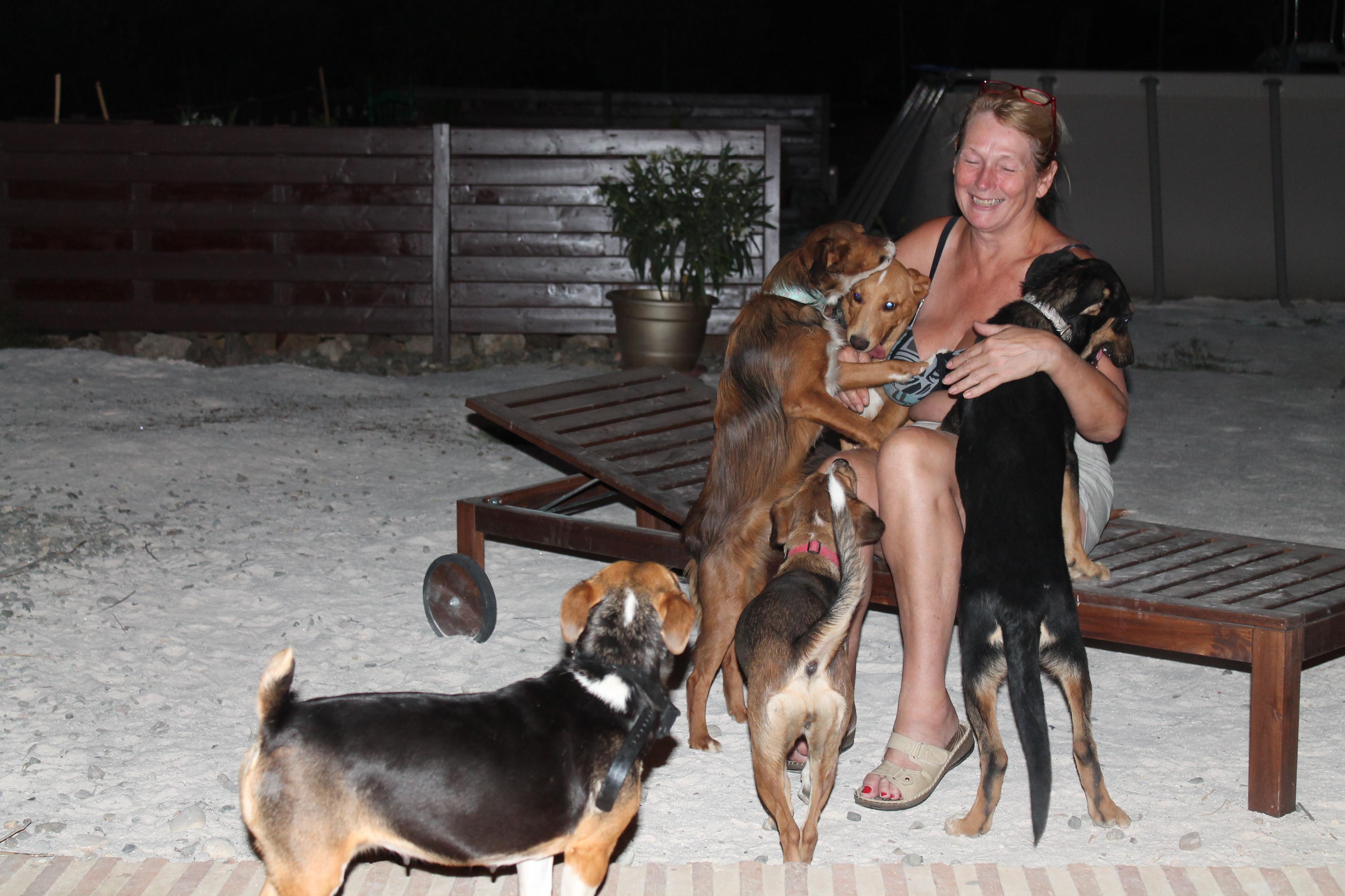 vera met honden ccoin