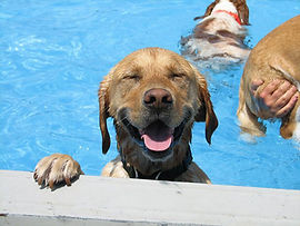 dog-pool-party-lucky-puppy-23.jpg