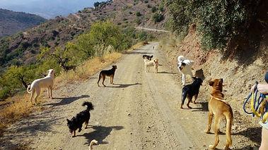 honden op wandel.jpeg