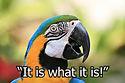 Parrot Talking.jpg