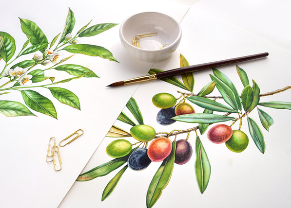 Watercolor Botanical Illustrations