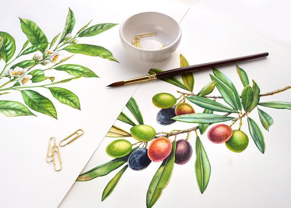 Watercolor Botanical Illustrations