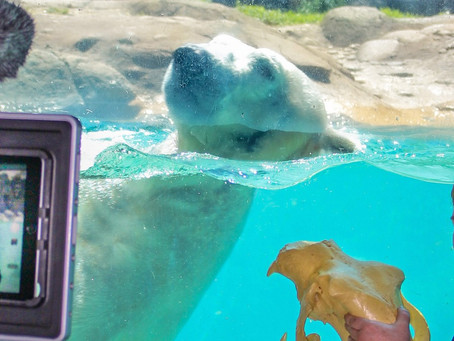 North Carolina Zoo Offers Virtual Summer Camps. Registration Now Open