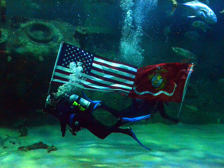 N.C. AQUARIUMS HONOR VETERANS NOV. 11