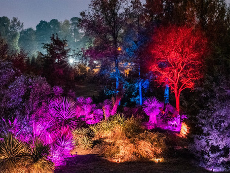 Magical Exhibition Illuminates NCSU Arboretum for 7-nights in November