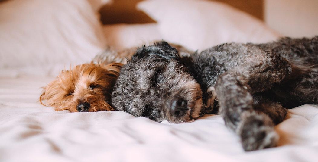 The Dog Life-Dog Home Boarding- Dog Behaviourist- Dog Trainer- Dog Training- Puppy Training- Residential Training- UK- Scotland- Inverness