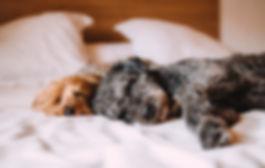 Gehoorzame, sociale pups