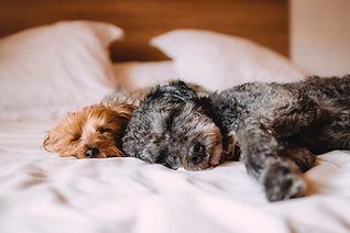 Dog boarding sleeping happy dogs