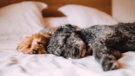 ¿Descansa bien tu perro?