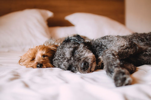 Sleeping Dogs on a bed