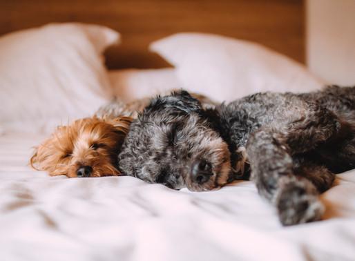 Arizona governor signs order allowing veterinarians to examine pets via telemedicine