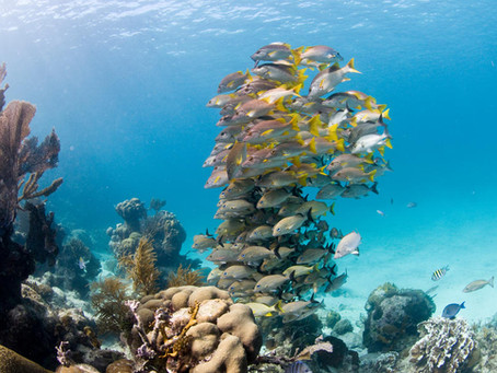 7 Ways you can help save the ocean