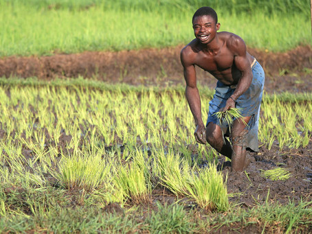 Agricultural businesses can stem the tide of migration | Africa