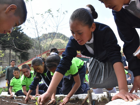 The Mexican school where pupils plant, harvest and eat together