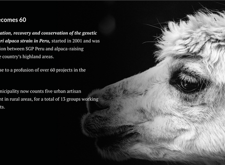 DIAMONDS OF THE ANDES | Conserving Genetic Resources of Suri alpaca in Peru